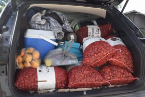 View of back of car after an afternoon of gathering chestnuts at Red Fern Farm.