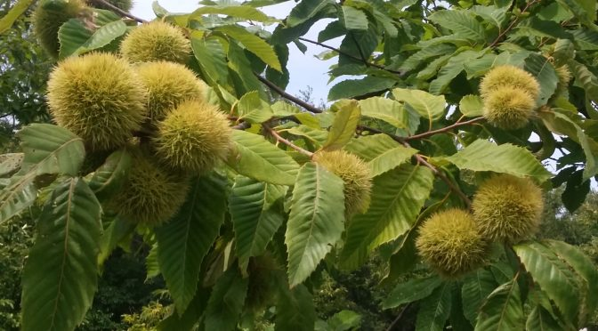 Chestnut Growers Workshop