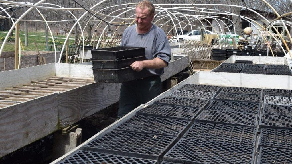 Tom moving seed trays